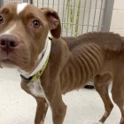 Dog Abandoned and Left to Die Gets Rescued and Is Adopted