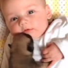 Infant Puppy Meets Infant Human Sibling for the First Time, Makes Instant Best Friend