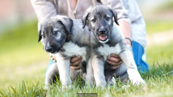 8.31.16 - twin puppies