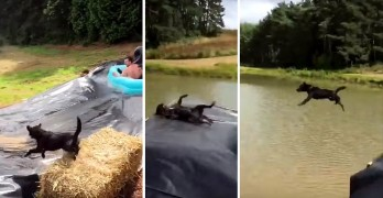 Dog Gets Blindsided by Epic Slip-N-Slide Tube!