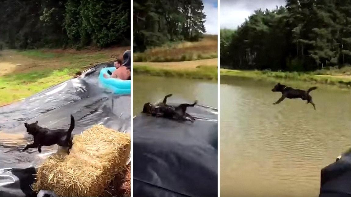 Dog Gets Blindsided by Epic Slip-N-Slide Tube!
