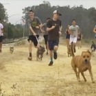 High School Cross-Country Team Brings Cooped-Up Shelter Dogs on Runs