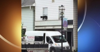 Good Samaritans Risk Injury to Rescue Dog Stuck on Second-Story Ledge