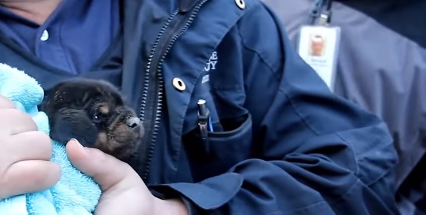 Animal Cops Detroit Best Rescues with the American Strays Project