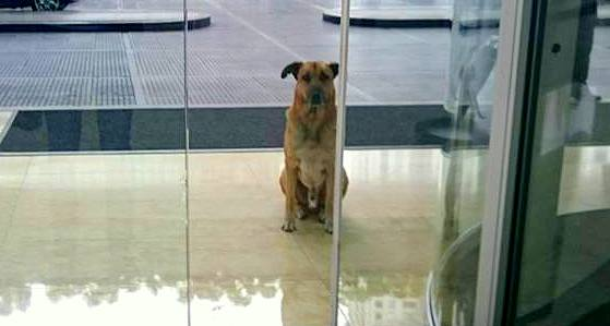 Flight Attendant Adopts the Street Dog Who Never Stopped Waiting for Her