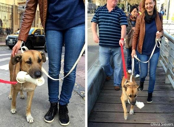 8.8.16 - Flight Attendant Adopts Hotel Dog2