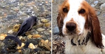 Hero Dog Saves the Life of a Stranded Baby Porpoise