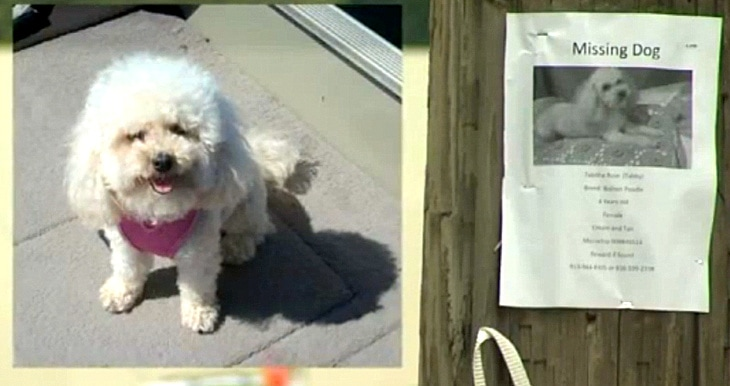 Missing Dog Recognizes Her Mom's Voice on News Story About Her Disappearance