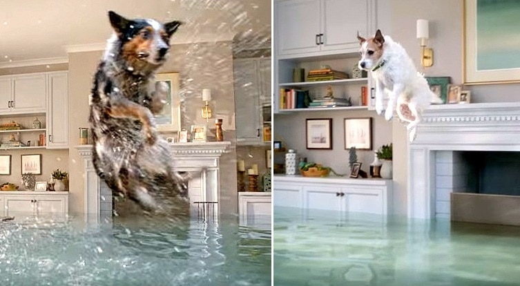 Dogs Participate in Hilarious Olympic-Style Diving Competition in Flooded House