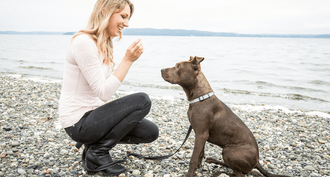 WhyDoesMyDog Creator Shares Her Training Insight