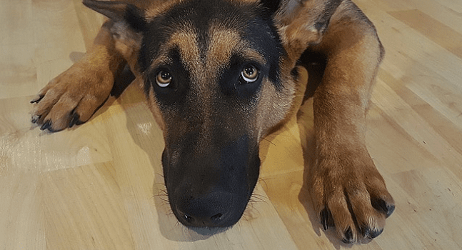 10 Things We Can Learn From Dogs