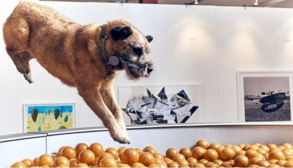 """Canine museum-goers found this giant dog bowl quite """"fetching."""" (Photo: Dominic Wilcox)"""