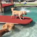 Golden Retriever Heaven? See For Yourself!