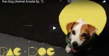 We've Got Pac-Dog Fever!