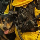 Dog Escapes Wildfire: Jumps into Firefighter's Arms