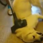 Wednesday Weird: This Dog LOVES the Vacuum!