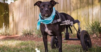 Zosia's Story: Disabled Dog Inspires Others