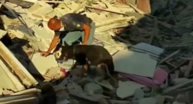 ALIVE! Watch as an Italian Search Dog Finds Little Girl Amid the Quake Rubble