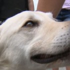 """Should Have Named Him """"Bob!"""" Dog Rescued From Lake Reunited with Owner"""