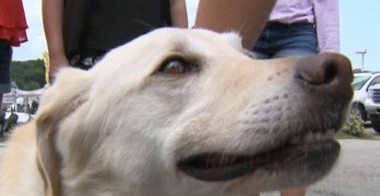 "Should Have Named Him ""Bob!"" Dog Rescued From Lake Reunited with Owner"