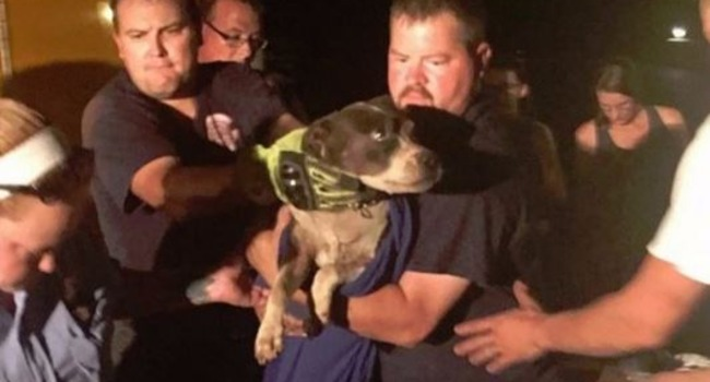 First Responders Rescue Dog From Culvert Pipe