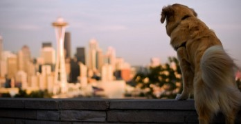 Zumper Ranks Top Pet-Friendly Cities. Is Yours On The List?