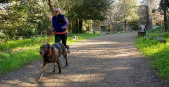 Survey Says… Dog Owners are Dynamos!