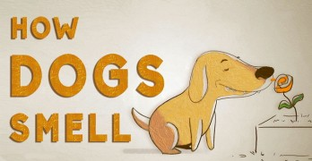 Sniff Test: Do You Know How Your Dog Smells?