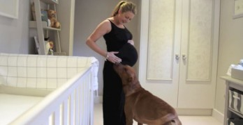 Touching Pregnancy Time-Lapse Starring Chester the Dog