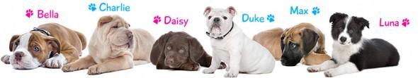 puppy-dog-names-banner