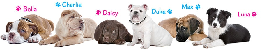 Top  Male Dog Names Uk Kennel Club