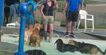 9.1.16 - dog at water parkFEAT