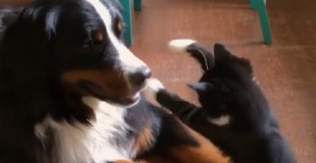 A Crazy, Kickboxing Kitty Is Just What This Dog Needed
