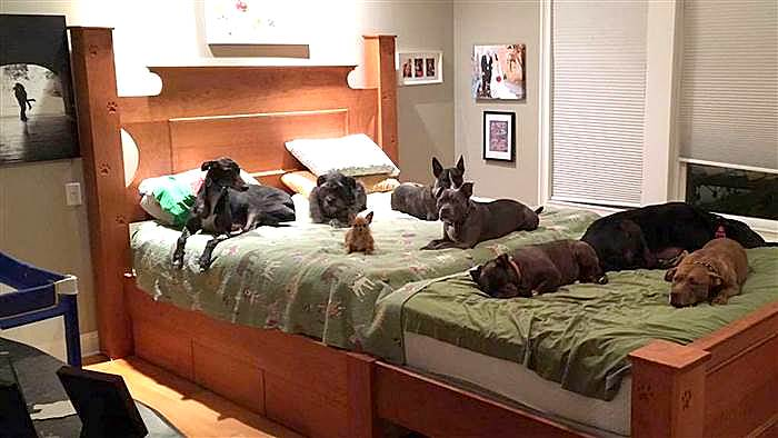 Trend  colossal bed for eight dogs uc