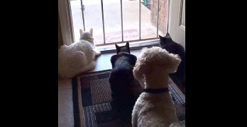 Dog Finally Gets the Drop on His Feline Siblings While They're TOTALLY Distracted