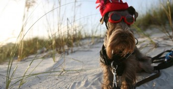 Hearing Alert Dog Finnegan McNeil Gets to Be a Hero Just About Every Day