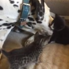 Louie the Dalmatian Loves His New Babysitting Gig