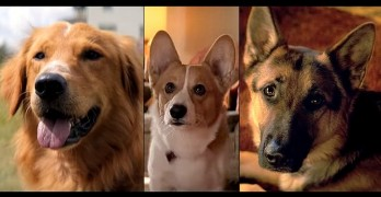 A Dog's Purpose:  A New Movie All About a Dog… Rather, One Dog as Many Dogs