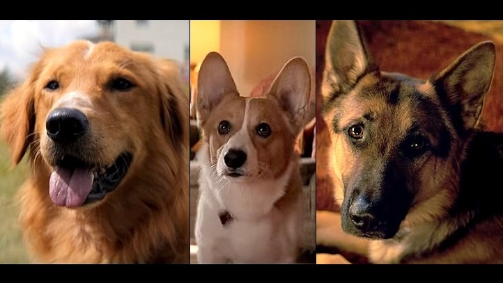 Dog Breeds In Dog S Purpose Movie