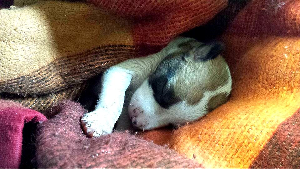 Clever Dog Saves the Life of a Newborn Puppy Abandoned on a Garbage Pile