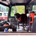 Dog Meant to Be in Fire Truck Parade Accidentally Ends Up Leading It