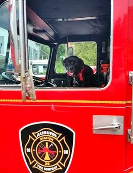 9-16-16-sophie-fire-truck3