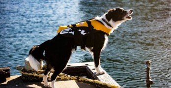 Australian National Maritime Museum Hires Rescue Dog to Keep Area Seagull-Free