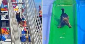 Tiny Dog Has More Fun on a Slide Than Any Kid Ever!