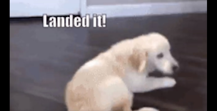 Over Excited Puppy Takes a Tumble Down Some Stairs for a Silly Greeting