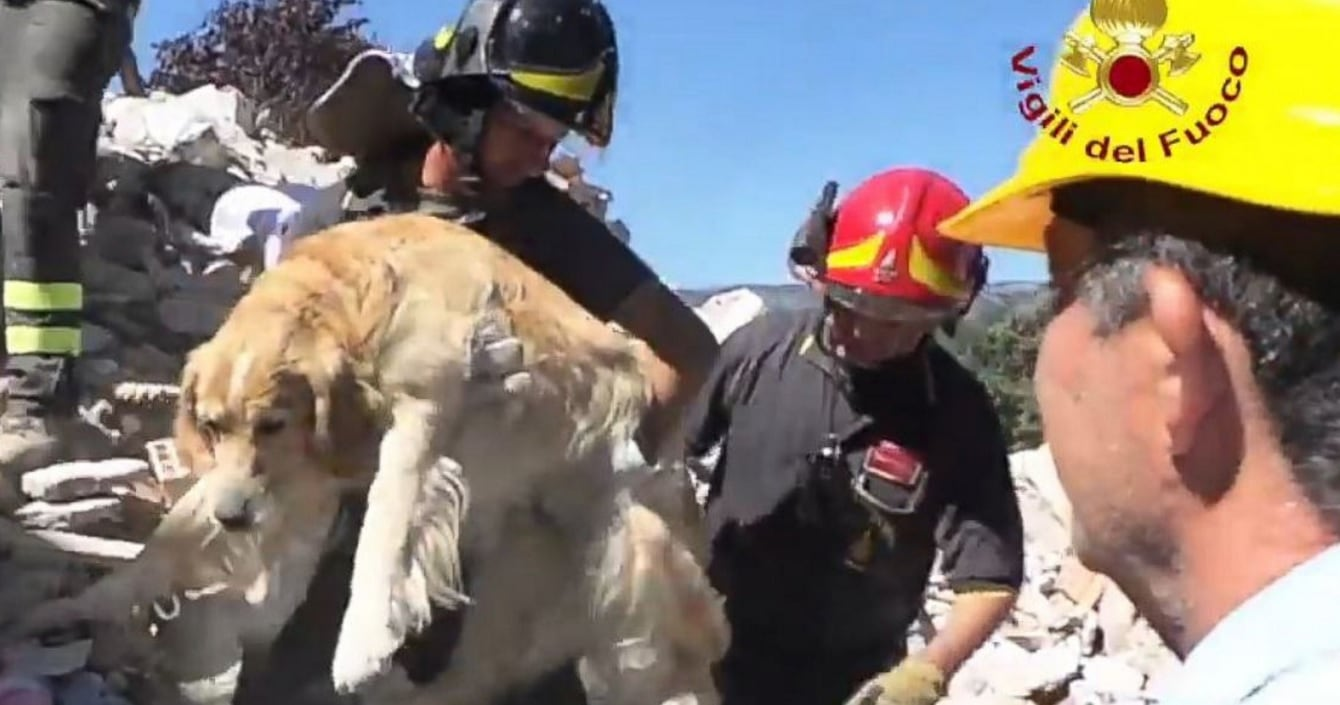 Firefighters Rescue Dog Stuck in Massive Rubble Pile for Nine Days in Italy