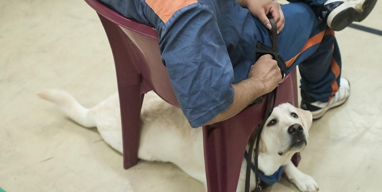 The Transformative Power of Dogs in Prison Programs and the Men They Help