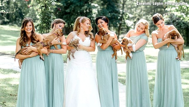 bridal party holds rescue puppies instead of bouquets for their photos. Black Bedroom Furniture Sets. Home Design Ideas