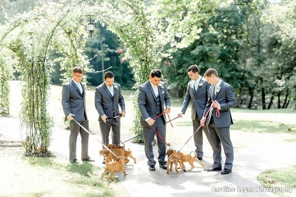 9-20-16-bridal-party-holds-rescue-puppies-instead-of-bouquets-for-their-photos2