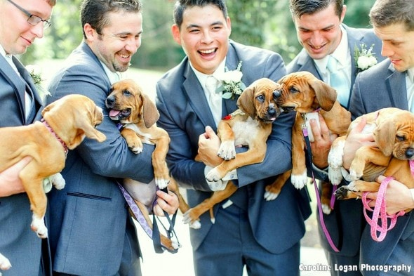 9-20-16-bridal-party-holds-rescue-puppies-instead-of-bouquets-for-their-photos4